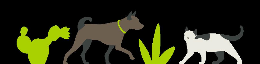 PV-Pet-Illustration
